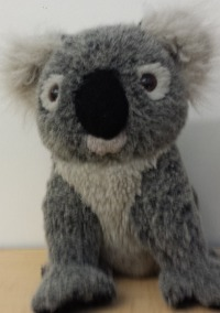 Lola the koala was stolen on Wednesday 27th from Mrs. Dampiers classroom. However, Lola never left the room because she was hidden on top of the shelf by Mr. Carbajal.