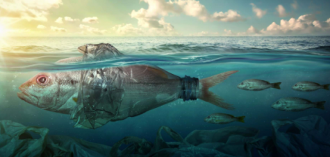 The effects of marine pollution