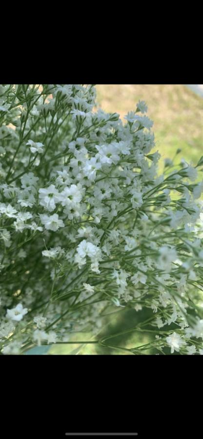 Flowers for my Grandma.  -Ariana Navarro